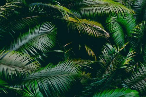 Facebook vai banir vendas de terras da Floresta Amazônica em seu Marketplace